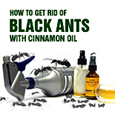 get rid of blacks with cinnamon oil