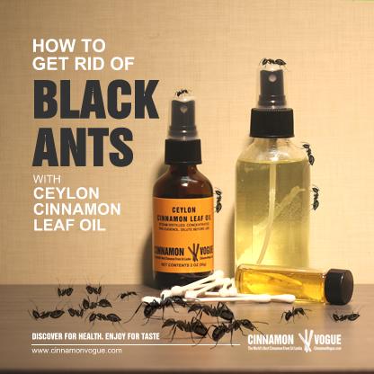 Get Rid Of Black Ants With Cinnamon Cinnamon Vogue