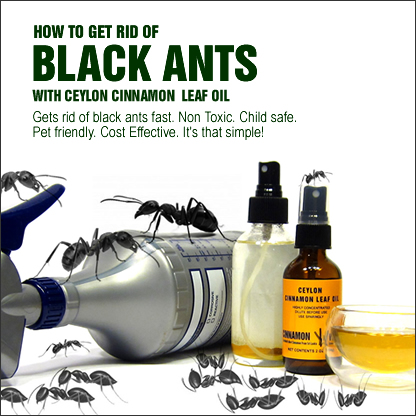 What Kills Fleas And Ticks How To Get Rid Of Black Ants In The Home Will Heat Treatment Kill
